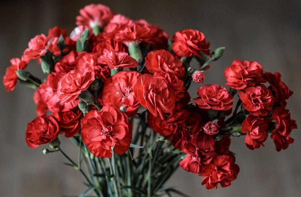 MSZP rózsa